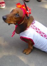 Одесситы и собаки в вышиванках отмечают 25-летие независимости Украины: фотореп