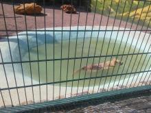 Белые тигры, львы, смешные сурикаты и множество обезьян - новый биопарк в Одессе: фотореп