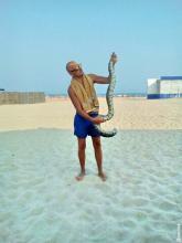 На пляже в Одесской области выловили двухметровую змею